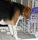 Scout in dishwasher