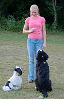 Heather training 2 dogs